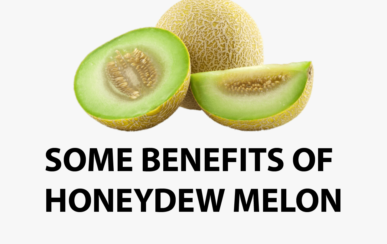 Can Dogs Have Honeydew Melon